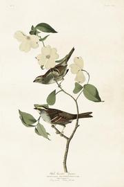 Vintage Poster birds flower 68